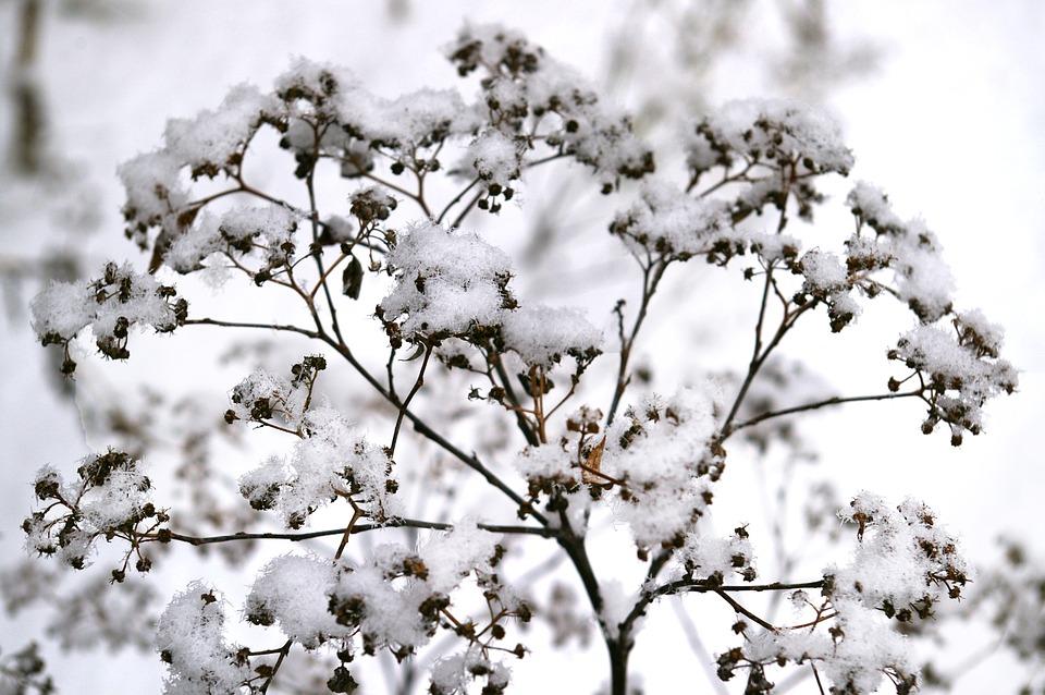 5 manieren om je tuin voor te bereiden op de winter
